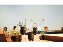 Yoga over Marrakech's rooftops_Source NOSADE