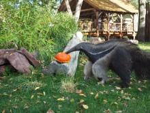 Zoo Leipzig: Halloween in Südamerika