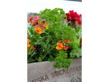 Sommarblommor och kryddväxter passar fint ihop