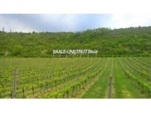 Saale-Unstrut vinskilt