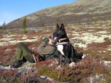 Elgjeger og hund på post