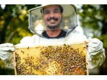 """Bienenzuchtprojekt """"Townbee"""""""
