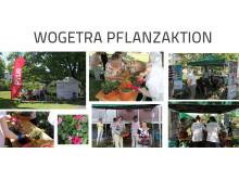 Pflanzen für WOGRTA-Mieter und Spenden für Bärenherz