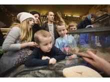 Naturhistorisk Museum, fossildagen og utdeling av støtte til fossiler.