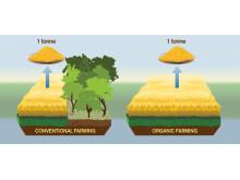 Organic food has bigger carbon footprint than conventional food