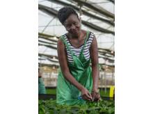 Blomsterarbeider ved Wagagai i Uganda