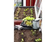 Enkel utplantering med minipluggbrätten