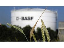 BASF bland ledande företagen i rapportering av klimatarbete globalt