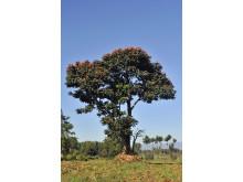 Ett av 100 miljoner träd i Vi-skogen