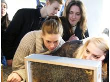 Fotografiskas restaurang lär sig om bin
