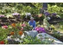 Konstnär Björn Wessman i sin trädgård