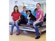Hundförare och arbetsterapeuter som skrivit bok om hundassisterad terapi