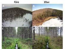 Undersökningsområdet före och efter skogskalavverkning