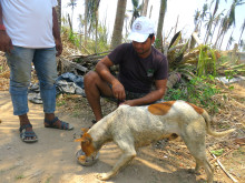 1905-WTG-Odisha-Soforthilfe-Hund-Fütterung