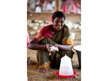 Kvinna från Indien som har egen kycklingfarm, Hand in Hand