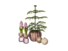 Hyacintvas, kruka, julgranskula
