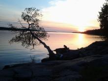 Solnedgång vid klippan
