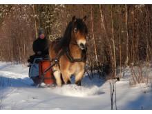 Småland Jönköping Foto Skärsjö häst (2)