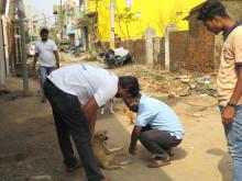 1905-WTG-Odisha-Soforthilfe-Hund-Untersuchung