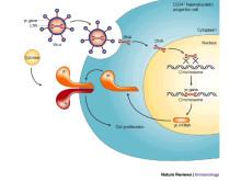 Lentivirus vector transfection steps