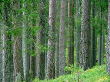 Landets virkesförråd fortsätter att öka visar statistik från Riksskogstaxeringen SLU.