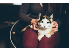 Persoonallisella Iiris-kissalla on kuusi varvasta ja upean värikkäät silmät.