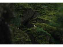 Alphaddicted_Island_BenSimonRehn_von Sony_4