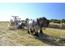 Fira Brukshästens dag den 22 september klockan 11-16