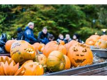 Halloween i Tivoli Friheden