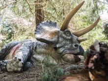 Knuthenborg Safaripark:  Dinosaurier-Wald - Triceratops