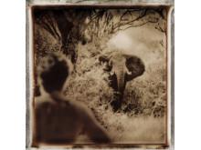 Elephant & Man, Murchison Falls, Uganda