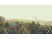 Harvest Carlin de Paolo