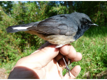 Sensationellt fågelfynd i Kina