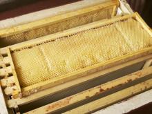 Ram med vaxceller fyllda med honung.