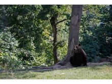 Bärenschutzzentrum Rumänien_Welttierschutzgesellschaft