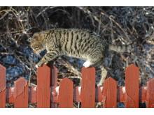 Kattebilleder fra Kattens Værn