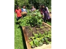 HFL garden