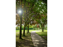 TREE-LINED: Path at Truffet Park in Langley