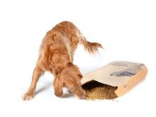 Magnussons hundmat, hund äter