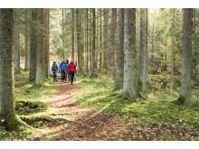 Skogspromenad med Friluftsfrämjandet