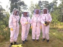 Sigtunas besöksnäring storsatsar på biodling