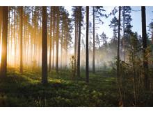 biobränsle-växjö energi-flis