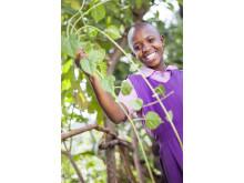 Svenska pantpengar ger träd och minskad fattigdom i Afrika