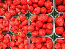 Nyplukkede og kortreiste norske jordbær - på plass i en butikk nær deg.