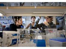 Research at Uppsala University, Rudbeck Laboratory