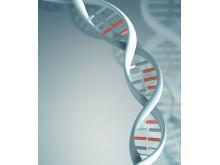 Radon påverkar DNA