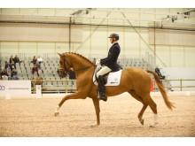 Jan Brink och RayMore i 7-års finalen på Elmia Scandinavian Horse Show.