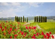 Vandring og vin Toscana