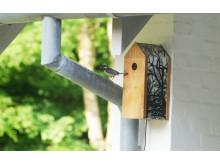 Fågelholk med webbkamera - Miljö