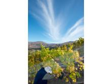 Hållbarhetsarbete i vingården. Akarua, Nya Zeeland